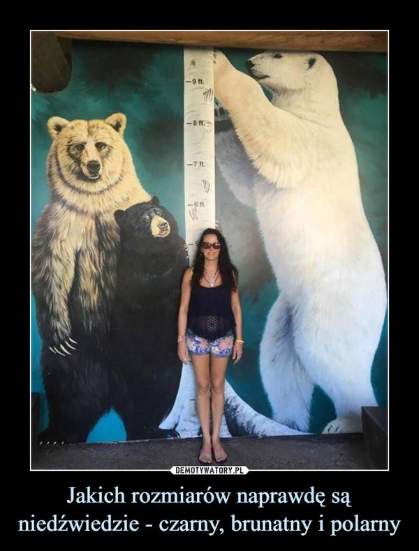 Jakich rozmiarów naprawdę są niedźwiedzie - czarny, brunatny i polarny –