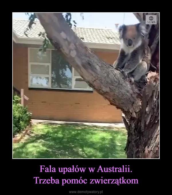 Fala upałów w Australii.Trzeba pomóc zwierzątkom –