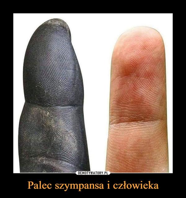 Palec szympansa i człowieka –