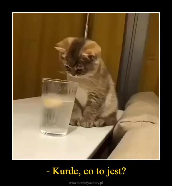- Kurde, co to jest? –