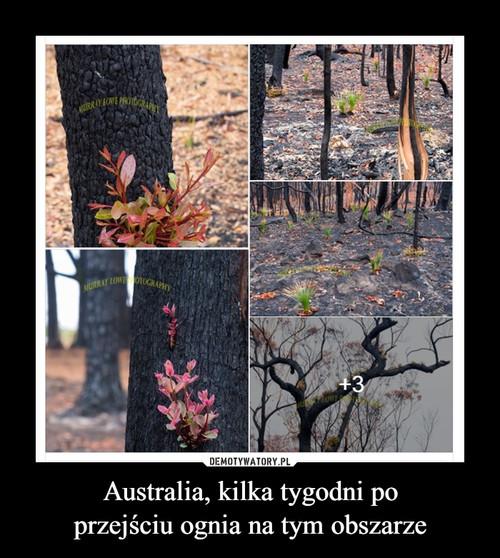 Australia, kilka tygodni po przejściu ognia na tym obszarze