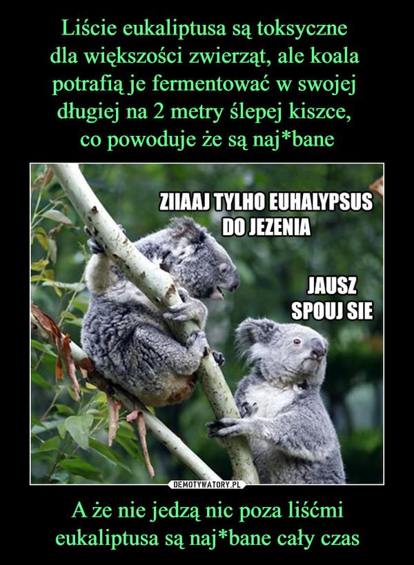 A że nie jedzą nic poza liśćmi eukaliptusa są naj*bane cały czas –