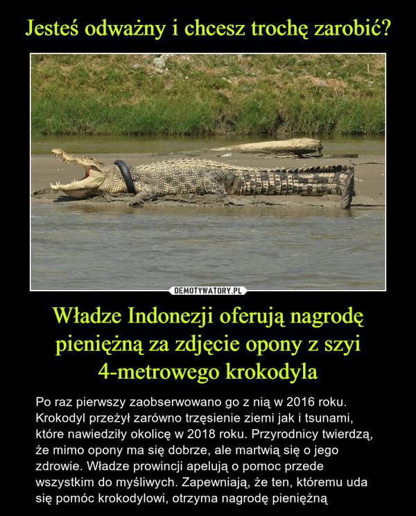 Władze Indonezji oferują nagrodę pieniężną za zdjęcie opony z szyi 4-metrowego krokodyla – Po raz pierwszy zaobserwowano go z nią w 2016 roku. Krokodyl przeżył zarówno trzęsienie ziemi jak i tsunami, które nawiedziły okolicę w 2018 roku. Przyrodnicy twierdzą, że mimo opony ma się dobrze, ale martwią się o jego zdrowie. Władze prowincji apelują o pomoc przede wszystkim do myśliwych. Zapewniają, że ten, któremu uda się pomóc krokodylowi, otrzyma nagrodę pieniężną