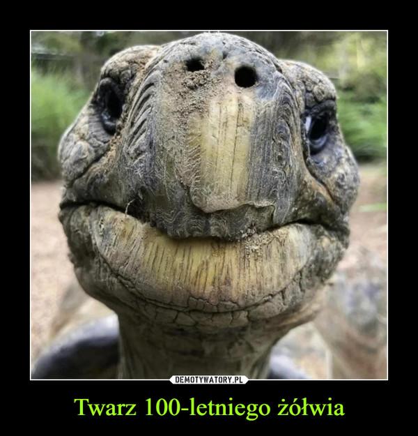 Twarz 100-letniego żółwia –