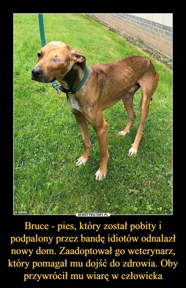 Bruce - pies, który został pobity i podpalony przez bandę idiotów odnalazł nowy dom. Zaadoptował go weterynarz, który pomagał mu dojść do zdrowia. Oby przywrócił mu wiarę w człowieka –