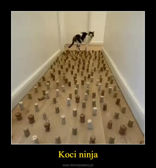 Koci ninja –