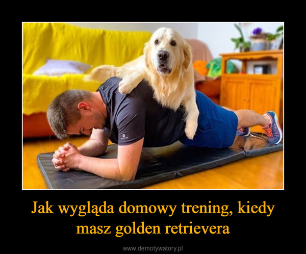 Jak wygląda domowy trening, kiedy masz golden retrievera –