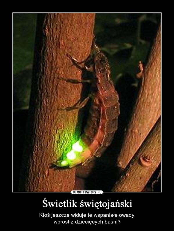 Świetlik świętojański – Ktoś jeszcze widuje te wspaniałe owadywprost z dziecięcych baśni?