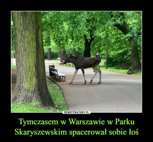 Tymczasem w Warszawie w Parku Skaryszewskim spacerował sobie łoś