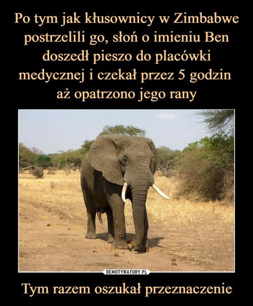 Po tym jak kłusownicy w Zimbabwe postrzelili go, słoń o imieniu Ben doszedł pieszo do placówki medycznej i czekał przez 5 godzin  aż opatrzono jego rany Tym razem oszukał przeznaczenie