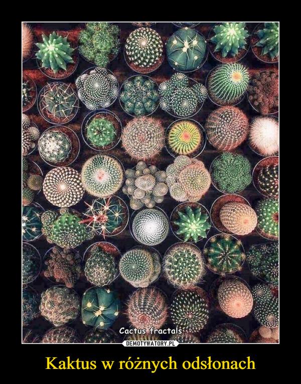 Kaktus w różnych odsłonach –