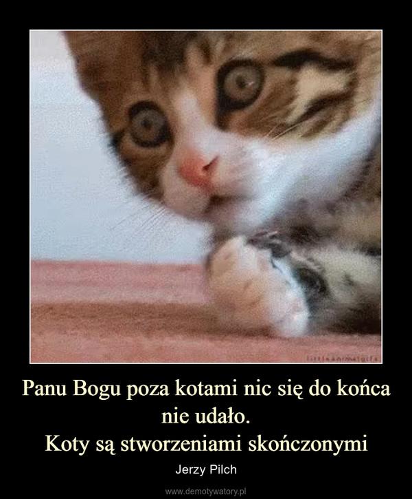 Panu Bogu poza kotami nic się do końcanie udało.Koty są stworzeniami skończonymi – Jerzy Pilch