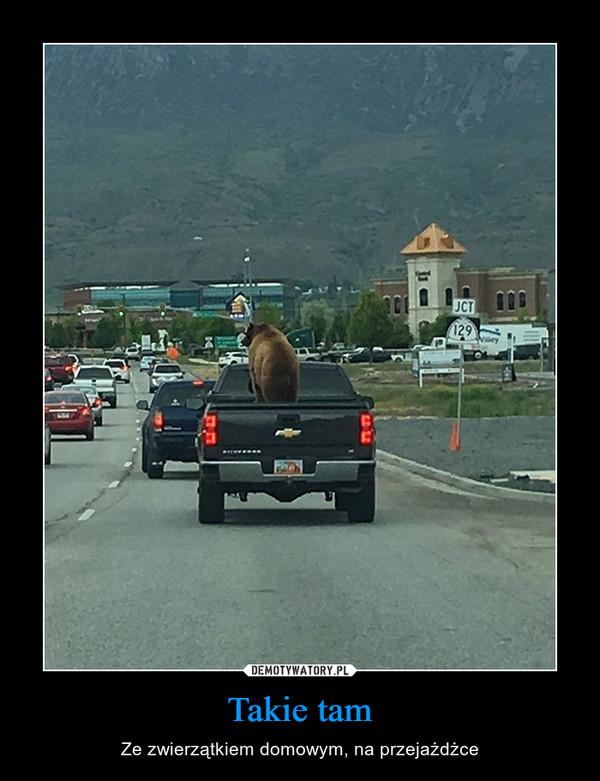 Takie tam – Ze zwierzątkiem domowym, na przejażdżce