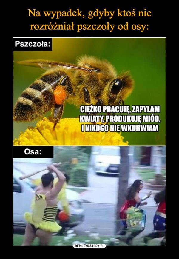 –  Pszczoła:PRACUJĘZAPYLAMMIÓD,I NIKOGO NIE WKURWIAMOsa: