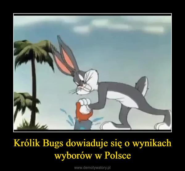 Królik Bugs dowiaduje się o wynikach wyborów w Polsce –