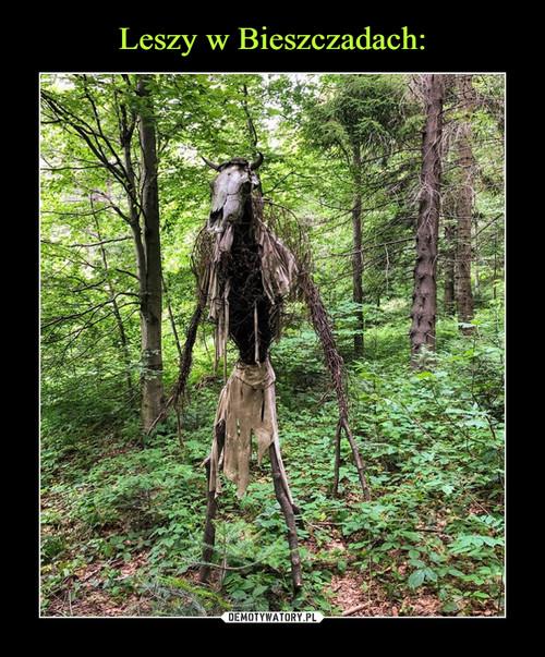 Leszy w Bieszczadach: