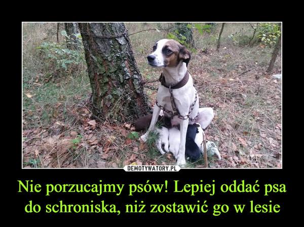 Nie porzucajmy psów! Lepiej oddać psa do schroniska, niż zostawić go w lesie –