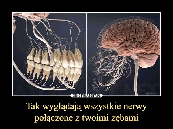 Tak wyglądają wszystkie nerwy połączone z twoimi zębami –