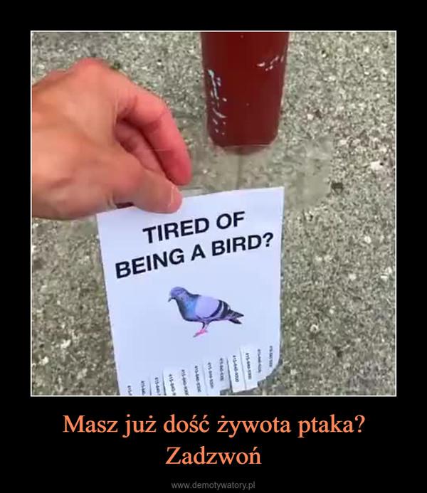 Masz już dość żywota ptaka? Zadzwoń –