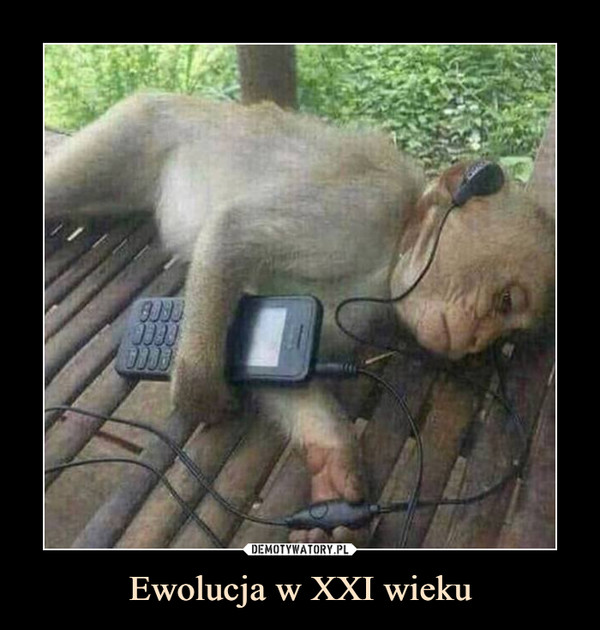 Ewolucja w XXI wieku –