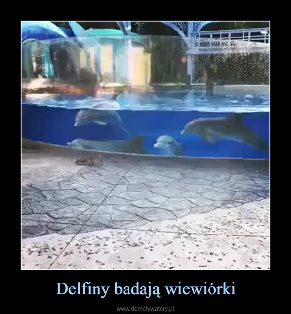 Delfiny badają wiewiórki –