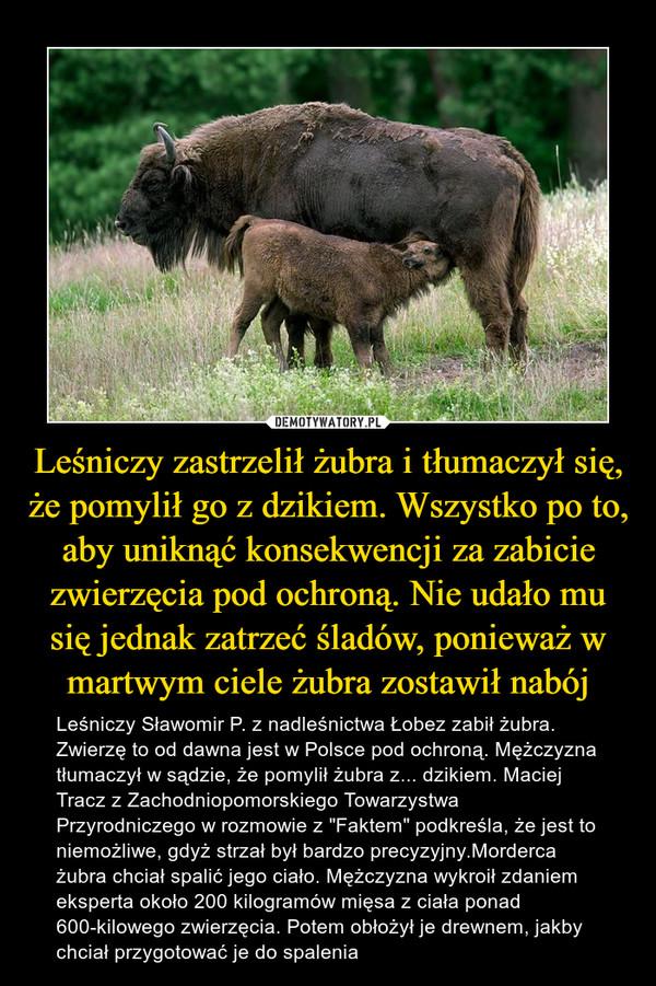 """Leśniczy zastrzelił żubra i tłumaczył się, że pomylił go z dzikiem. Wszystko po to, aby uniknąć konsekwencji za zabicie zwierzęcia pod ochroną. Nie udało mu się jednak zatrzeć śladów, ponieważ w martwym ciele żubra zostawił nabój – Leśniczy Sławomir P. z nadleśnictwa Łobez zabił żubra. Zwierzę to od dawna jest w Polsce pod ochroną. Mężczyzna tłumaczył w sądzie, że pomylił żubra z... dzikiem. Maciej Tracz z Zachodniopomorskiego Towarzystwa Przyrodniczego w rozmowie z """"Faktem"""" podkreśla, że jest to niemożliwe, gdyż strzał był bardzo precyzyjny.Morderca żubra chciał spalić jego ciało. Mężczyzna wykroił zdaniem eksperta około 200 kilogramów mięsa z ciała ponad 600-kilowego zwierzęcia. Potem obłożył je drewnem, jakby chciał przygotować je do spalenia"""