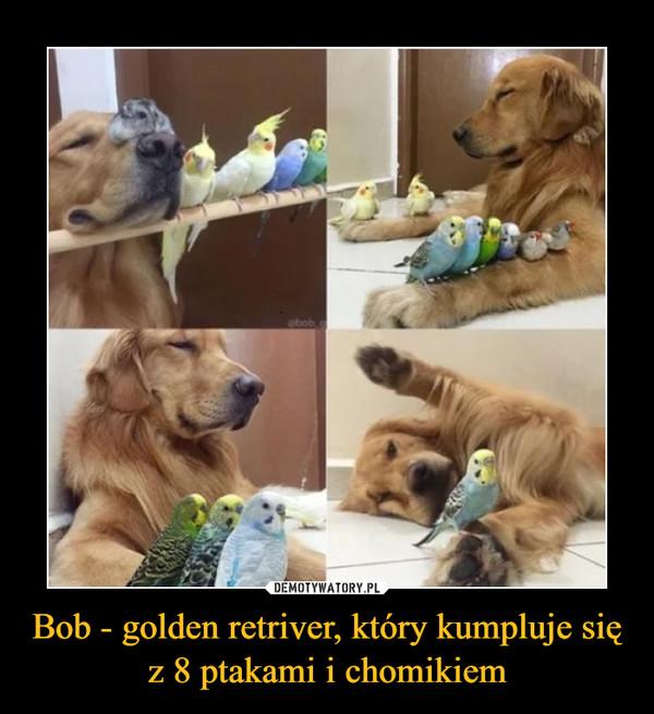 Bob - golden retriver, który kumpluje się z 8 ptakami i chomikiem –