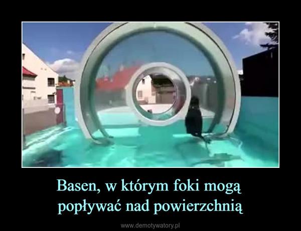Basen, w którym foki mogą popływać nad powierzchnią –