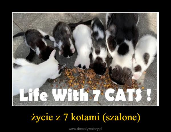 życie z 7 kotami (szalone) –