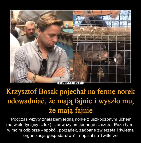 """Krzysztof Bosak pojechał na fermę norek udowadniać, że mają fajnie i wyszło mu, że mają fajnie – """"Podczas wizyty znalazłem jedną norkę z uszkodzonym uchem (na wiele tysięcy sztuk) i zauważyłem jednego szczura. Poza tym - w moim odbiorze - spokój, porządek, zadbane zwierzęta i świetna organizacja gospodarstwa"""" - napisał na Twitterze"""