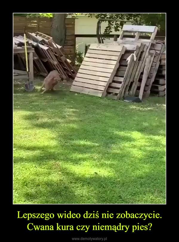 Lepszego wideo dziś nie zobaczycie. Cwana kura czy niemądry pies? –