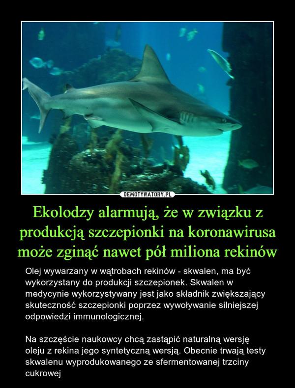 Ekolodzy alarmują, że w związku z produkcją szczepionki na koronawirusa może zginąć nawet pół miliona rekinów – Olej wywarzany w wątrobach rekinów - skwalen, ma być wykorzystany do produkcji szczepionek. Skwalen w medycynie wykorzystywany jest jako składnik zwiększający skuteczność szczepionki poprzez wywoływanie silniejszej odpowiedzi immunologicznej.Na szczęście naukowcy chcą zastąpić naturalną wersję oleju z rekina jego syntetyczną wersją. Obecnie trwają testy skwalenu wyprodukowanego ze sfermentowanej trzciny cukrowej