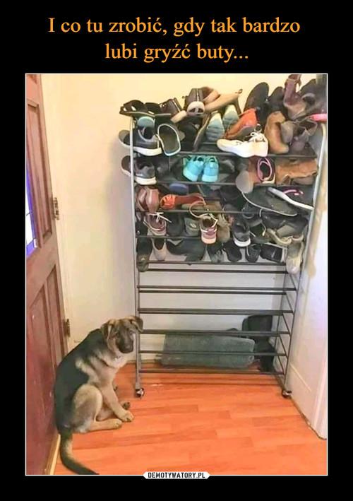 I co tu zrobić, gdy tak bardzo  lubi gryźć buty...