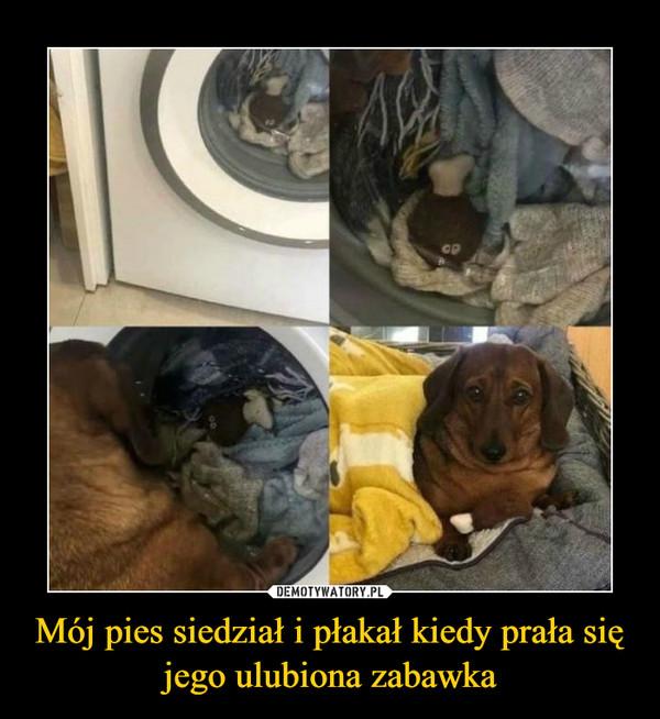 Mój pies siedział i płakał kiedy prała się jego ulubiona zabawka –