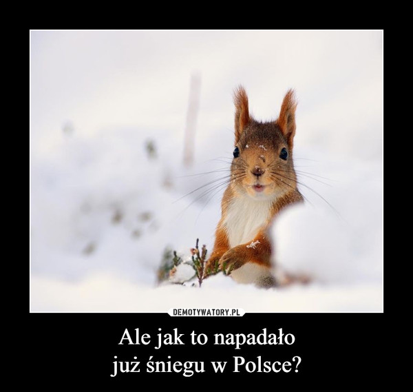 Ale jak to napadałojuż śniegu w Polsce? –