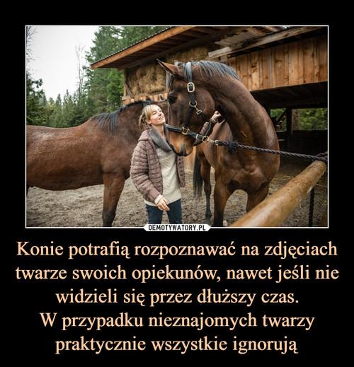 Konie potrafią rozpoznawać na zdjęciach twarze swoich opiekunów, nawet jeśli nie widzieli się przez dłuższy czas. W przypadku nieznajomych twarzy praktycznie wszystkie ignorują
