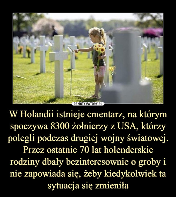 W Holandii istnieje cmentarz, na którym spoczywa 8300 żołnierzy z USA, którzy polegli podczas drugiej wojny światowej. Przez ostatnie 70 lat holenderskie rodziny dbały bezinteresownie o groby i nie zapowiada się, żeby kiedykolwiek ta sytuacja się zmieniła –