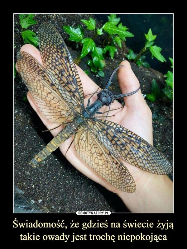 Świadomość, że gdzieś na świecie żyją takie owady jest trochę niepokojąca –