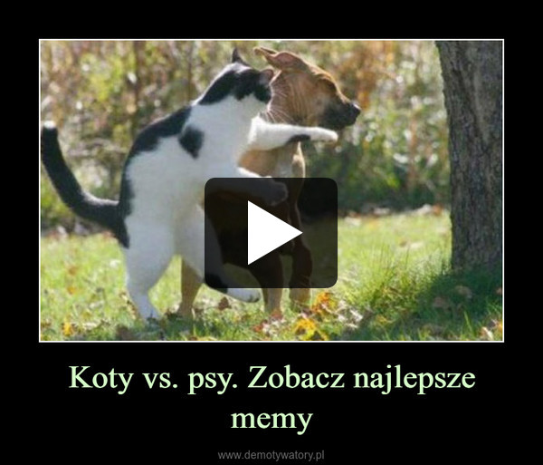 Koty vs. psy. Zobacz najlepsze memy –