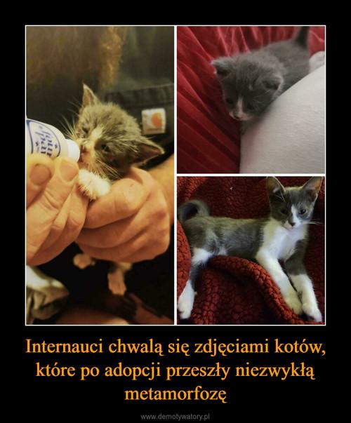 Internauci chwalą się zdjęciami kotów, które po adopcji przeszły niezwykłą metamorfozę