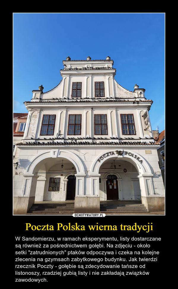 """Poczta Polska wierna tradycji – W Sandomierzu, w ramach eksperymentu, listy dostarczane są również za pośrednictwem gołębi. Na zdjęciu - około setki """"zatrudnionych"""" ptaków odpoczywa i czeka na kolejne zlecenia na gzymsach zabytkowego budynku. Jak twierdzi rzecznik Poczty - gołębie są zdecydowanie tańsze od listonoszy, rzadziej gubią listy i nie zakładają związków zawodowych."""