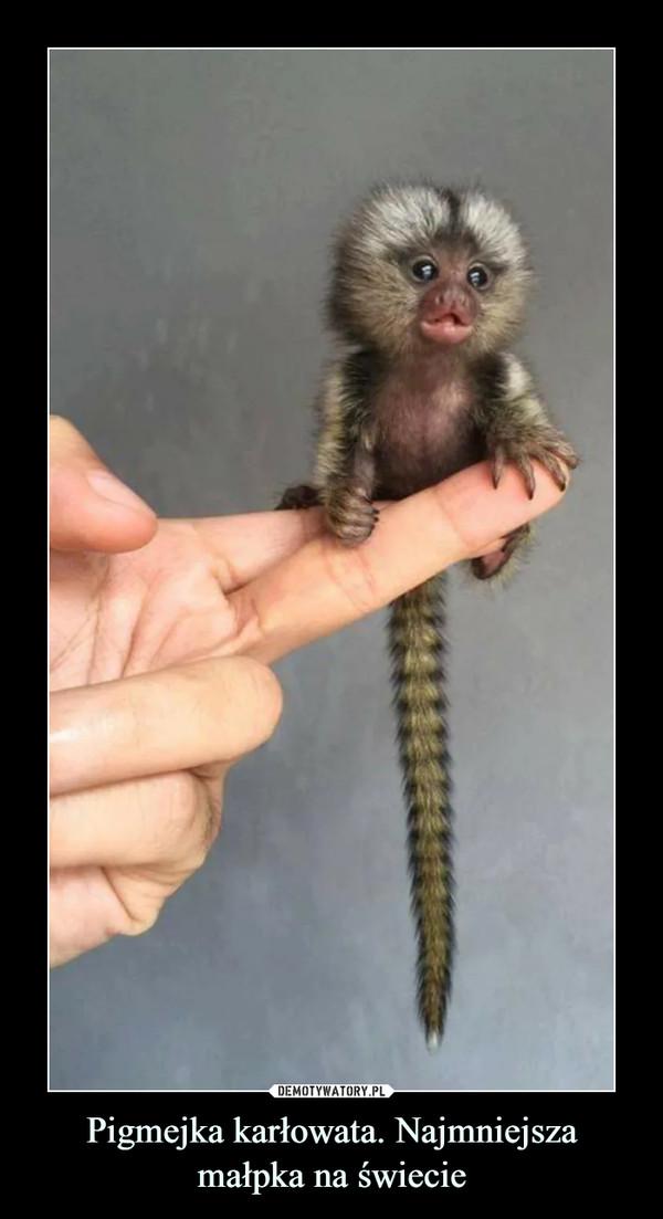 Pigmejka karłowata. Najmniejsza małpka na świecie –