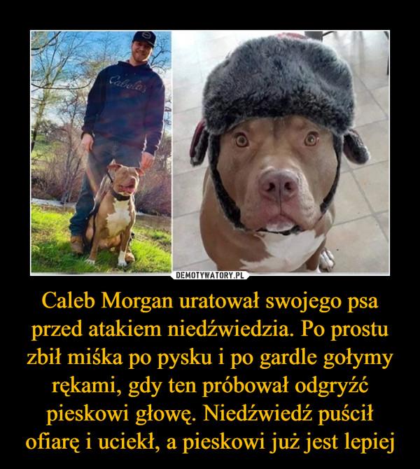 Caleb Morgan uratował swojego psa przed atakiem niedźwiedzia. Po prostu zbił miśka po pysku i po gardle gołymy rękami, gdy ten próbował odgryźć pieskowi głowę. Niedźwiedź puścił ofiarę i uciekł, a pieskowi już jest lepiej –
