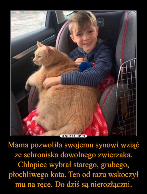 Mama pozwoliła swojemu synowi wziąć ze schroniska dowolnego zwierzaka. Chłopiec wybrał starego, grubego, płochliwego kota. Ten od razu wskoczył mu na ręce. Do dziś są nierozłączni. –