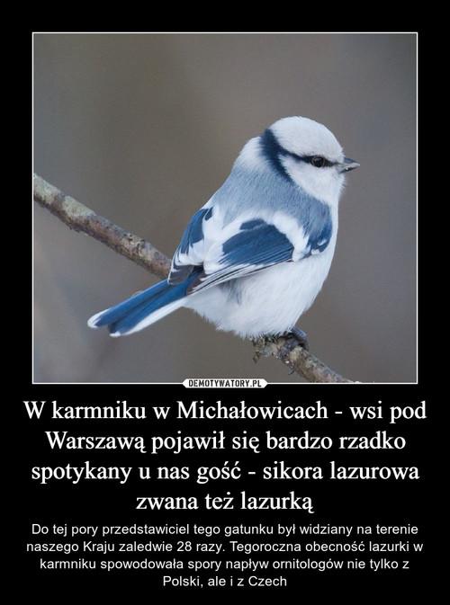 W karmniku w Michałowicach - wsi pod Warszawą pojawił się bardzo rzadko spotykany u nas gość - sikora lazurowa zwana też lazurką