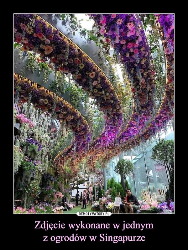 Zdjęcie wykonane w jednymz ogrodów w Singapurze –