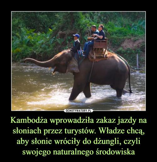 Kambodża wprowadziła zakaz jazdy na słoniach przez turystów. Władze chcą, aby słonie wróciły do dżungli, czyli swojego naturalnego środowiska