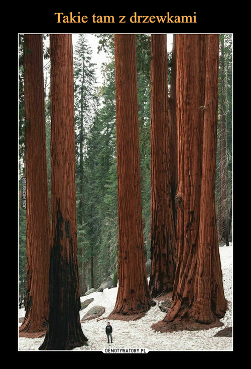 Takie tam z drzewkami