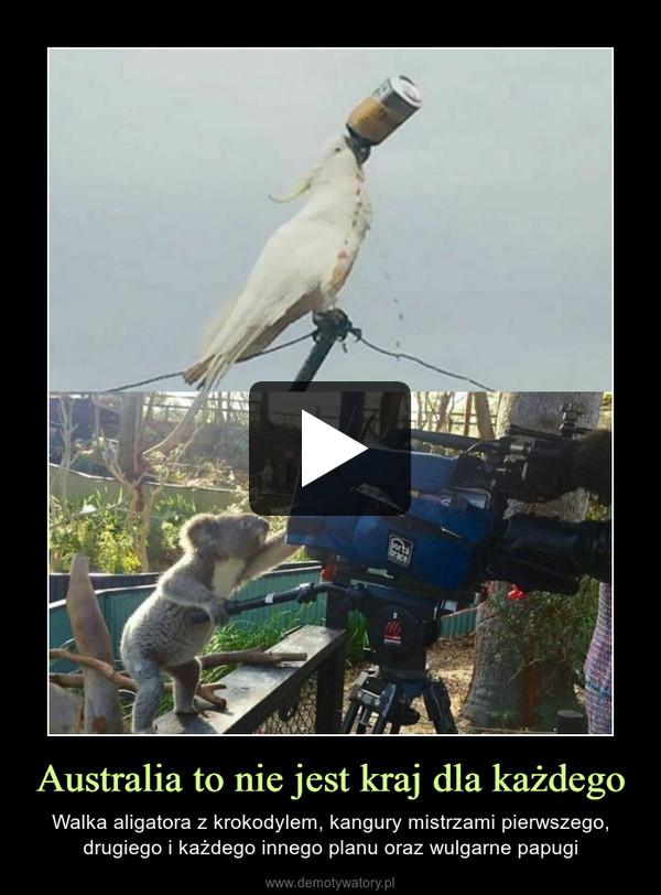 Australia to nie jest kraj dla każdego – Walka aligatora z krokodylem, kangury mistrzami pierwszego, drugiego i każdego innego planu oraz wulgarne papugi
