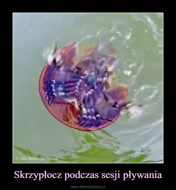 Skrzypłocz podczas sesji pływania –
